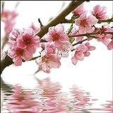 Artland Qualitätsbilder I Wandbilder Selbstklebende Wandfolie 50 x 50 cm Botanik Blumen Blüte Foto Pink Rosa A5LF Pfirsichblüten reflektieren im Wasser