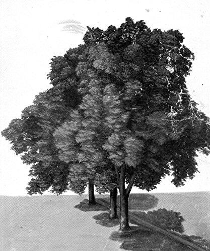 Bilderdepot24 Vlies Fototapete Albrecht Dürer - Alte Meister - DREI Linden - schwarz Weiss - 130x155 cm - mit Kleister - Poster - Foto auf Tapete - Wandbild - Wandtapete - Vliestapete (Schwarz Und Weiß-unkraut-poster)