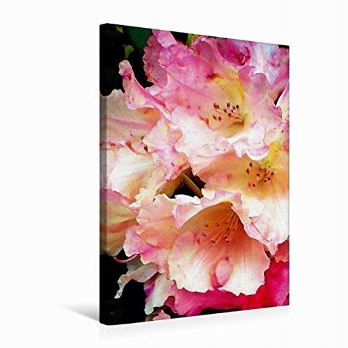 Premium Tessile della tela 30cm x 45cm di Rododendro, 50 x 75 cm por Art-Motiva