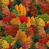 Fat Quarter Ernte Quilts Herbstliche Bäume Baumwolle
