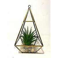 Decorativa Artificial suculentas en para colgar terrario de cristal y de mesa