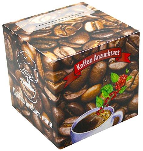 Geschenk-Anzuchtset Kaffee - Echter Cafe Arabica Nana - Kaffee Samen Anzuchtset - Geschenk Für...