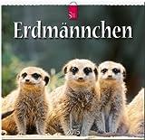 Erdmännchen 2015 - Original Stürtz-Kalender - Mittelformat-Kalender 33 x 31 cm