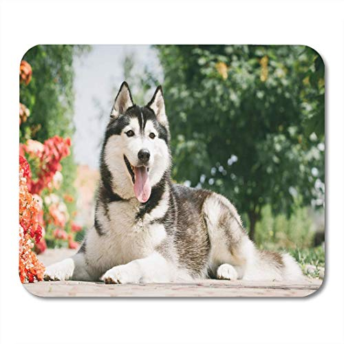 Mausunterlage Schwarzer Hund, der nahe blühendem Rosen-Porträt Mousepad Bushs für Notizbücher, Tischrechner liegt Mauspads -