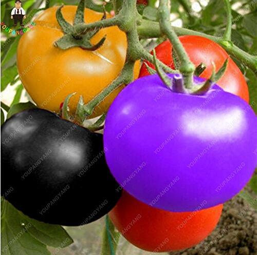 100pcs Bunte Tomaten-Samen Seltene Zier Gemüse & Obst Samen Bio-Hausgarten-Topfpflanzen Süße Bonsai Seed