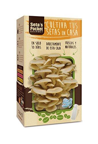 Seta's Pocket - Kit de Setas Autocultivo - Cultivar setas en casa en solo 10 días