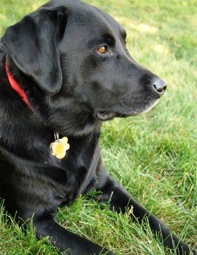 Journals Labrador Retriever: Classic (Lined Pages) Labrador Retriever Cover Journal Option - ON Sale Now - JUST $6.99