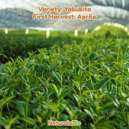 Japanischer-Grner-Tee-Gyokuro-Bio-100g-100-natrlicher-und-reiner-grner-Tee-lose-in-Blttern-der-ersten-Ernte-die-in-Japan-angebaut-werden-Pure-Organic-Japanese-Gyokuro-Green-Tea-NATURALEBIO