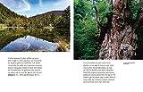 Shinrin Yoku - L'art et la science du bain de forêt - Comment la forêt nous soigne