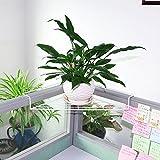 qzp Blumenregal Metall Schreibtisch-Stativ-Eisen-Regal-Schmiedeeisen-Eckrahmen-rechtwinklige Versenkte Büro-Blumen-Stand-europäisches Neues Weiß,White