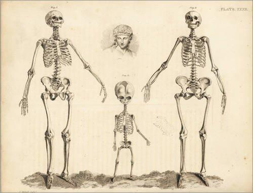 Forex-Platte 120 x 90 cm: Vergleich der Skelette des menschlichen männlichen, weiblichen und Fötus von Jean Joseph Sue / Fotofinder.com