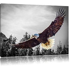 großer fliegender Adler schwarz/weiß Format: 120x80 auf Leinwand, XXL riesige Bilder fertig gerahmt mit Keilrahmen, Kunstdruck auf Wandbild mit Rahmen, günstiger als Gemälde oder Ölbild, kein Poster oder Plakat