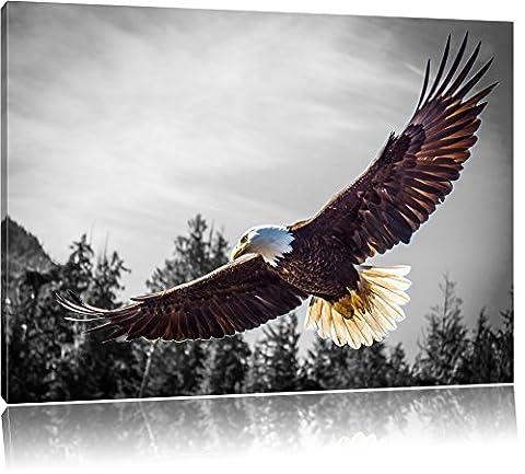 grand aigle volant noir / blanc Taille: 80x60 sur toile, XXL énormes Photos complètement encadrée avec civière, impression d
