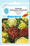 Zierkohl, Brassica oleracea