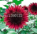 40 PCS mini-Helianthus Red Sunflower Seeds projet Red Sun Fortune Bloom Garden Heirloom Seeds Bonsai plantes Graines OM