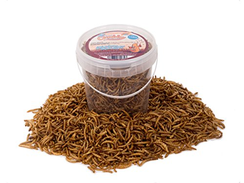 1-litre-chubby-dried-mealworms-with-free-delivery-for-wild-birds