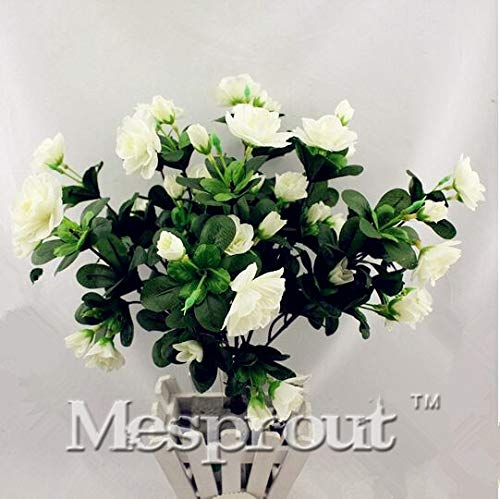 sanhoc 5 pcs capo jasmine bonsai, (gardenia jasminoides) fragrant esotico arbusto aprire pollinate rara bellezza bonsai da interno bonsai del fiore