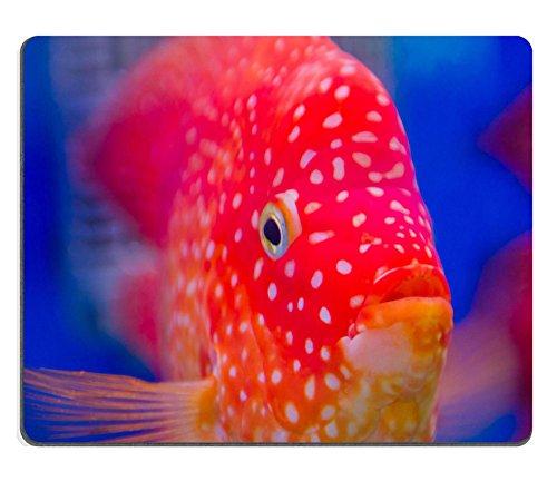 MSD Mousepad de goma natural imagen ID: 34838986carpas Koi peces, color 846