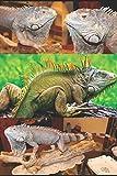 TAXIDERMIA: NOCIONES E TÉCNICO VOL. 4 Reptiles: Preparación de uno IGUANA