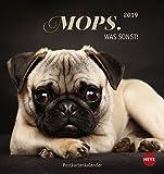 Mops Postkartenkalender - Kalender 2019