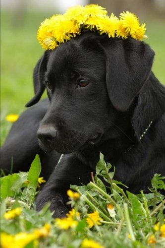 black-labrador-retriever-wearing-a-crown-of-yellow-dandelions-journal-150-page-lined-notebook-diary