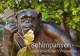 Schimpansen - unsere nächsten Verwandten (Wandkalender 2018 DIN A2 quer): Porträts von Schimpansen - unseren nächsten Verwandten (Monatskalender, 14 ... [Kalender] [Apr 01, 2017] Brodde, Ulrich