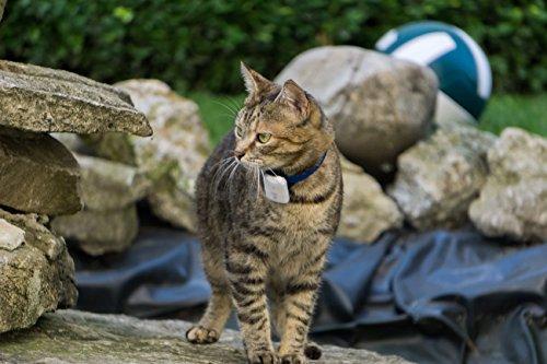 Girafus® Pro-Track-tor Haustier Hund Katze Kleintier Finder Sucher Ortung + Ladegerät Abbildung 3