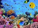 Fototapete Korallenriff mit Fischen 350cm Breit x 260cm Hoch Vlies Tapete Wandtapete - Tapete - Moderne Wanddeko - Wandbilder - Fotogeschenke - Wand Dekoration wandmotiv24