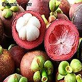 La venta caliente 2 Semillas Partículas / la bolsa de mangostán, rico en nutrientes reina de las frutas tropicales, semillas de frutas