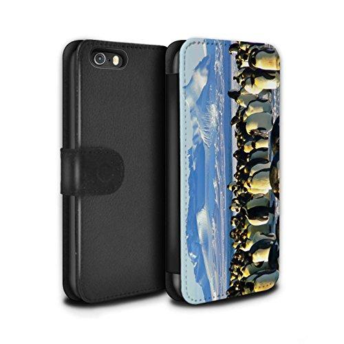 STUFF4 PU-Leder Hülle/Case/Tasche/Cover für Apple iPhone 5/5S / Weiß Eisbär Muster / Arktis Tiere Kollektion Kaiser Pinguine