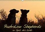 Australian Shepherds im Spiel des Lichts (Wandkalender 2019 DIN A3 quer): Faszinierende Hundeportraits (Monatskalender, 14 Seiten ) (CALVENDO Tiere)