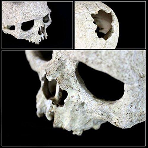 Sharplace Menschlicher Schädel Totenkopf DIY Dekoration für Reptilien Terrarium