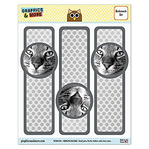 Lot de 3marque-pages laminé brillant–Cat Kitty chaton Domestic Shorthair Tabby