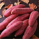 20/50pcs Süßkartoffel Samen Gesundheit Anti-Falten-Ernährung,lila&rot Süßkartoffel Pflanze Obst & Gemüse Samen Bonsai Hausgarten Pflanze