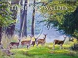 Tiere des Waldes 2019 - Bildkalender quer (56 x 42) - Tierkalender - Naturkalender