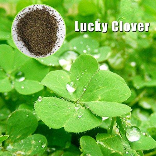 Rosepoem Aquarium Pflanzen Samen 1 Tasche Wasser Grassamen Wasser Grünpflanzensamen Glücksklee
