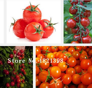 Fruits et légumes graines couleur rouge des graines de tomates Très bon 2 g paquet de couleur de qualité