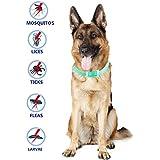 Pulci e zecche collare cane collare antipulci pulci e zecche collare per cani regolabile impermeabile Proteggere per cani, smette di mordere e prurito, uccide le uova di insetti (per cane)