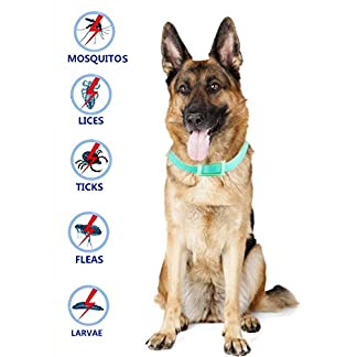 best tick collar for small, medium and large dogs, waterproof, natural flea and tick protection last for 3 months Best Tick Collar for Small, Medium and Large Dogs, Waterproof, Natural Flea And Tick Protection Last for 3 Months 51gR0kuqe5L