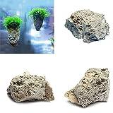 Hinmay Piedra pómez decorativa para acuario, diseño de roca y pómez natural, 3-5cm