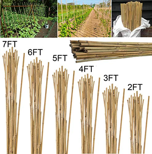 Bargains Hut 2ft 3ft 4ft 5ft 6ft 7ft Professional Bamboo Canes Thick Stake Garden Plant Flower Support Bamboo Stick Cane Pole (50, 7ft (213cm))
