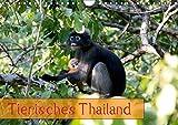 Tierisches Thailand (Wandkalender 2019 DIN A4 quer): Wunderbare Tierwelt Thailands (Monatskalender, 14 Seiten) (CALVENDO Tiere)