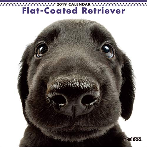Der Hund Wand Kalender 2019 Flat Coated Retriever