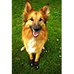 4Paws Dog Boot Active Paw Protectors - (1 x Pair - 2 boots) Reflective and Robust with rubber grip sole and breathable… 13