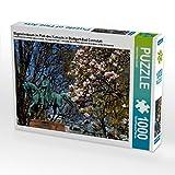 Magnolienbaum im Park des Kursaals in Stuttgart-Bad Cannstatt 1000 Teile Puzzle quer (CALVENDO Natur)