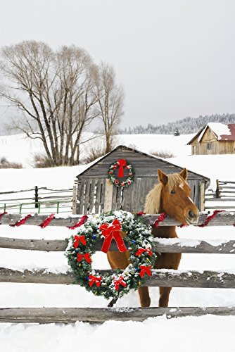 Michael DeYoung / Design Pics – Horse On Soward Ranch Decorated For The Holidays Antelope Valley Creede Colorado Photo Print (55,88 x 86,36 cm) (Ranch Holiday)