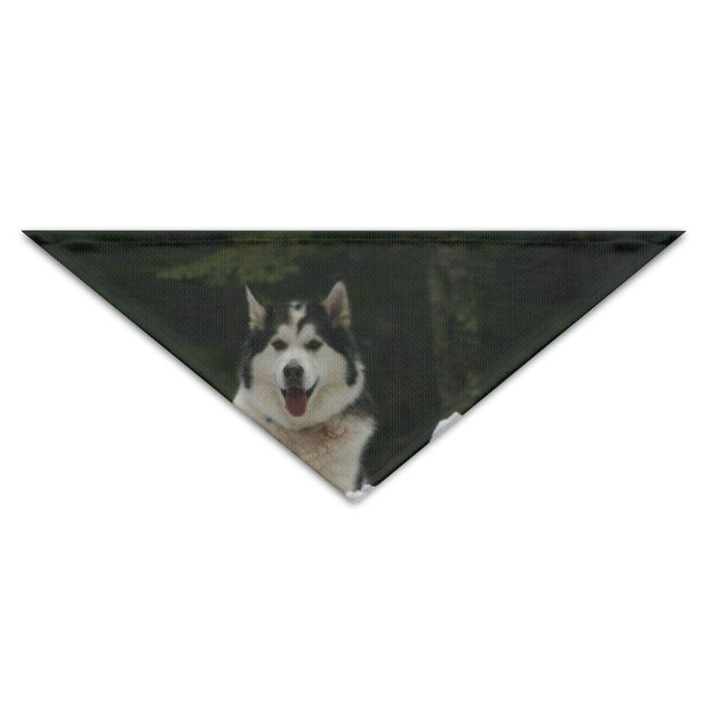 OUYouDeFangA Siberian Husky Piebald Dogs Birthday Bandana Scarf,washable Puppy Cat Neckerchief,triangle Bibs Accessory For Small Pet – Great Gift Idea