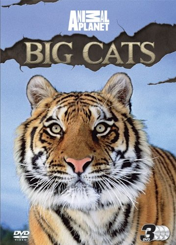 discovery-channel-big-cats-dvd-edizione-regno-unito