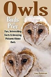 Owls: Birds Of Prey