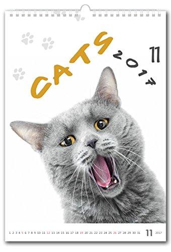 C139-17 Kalpa Calendario da Muro 2017 Calendario 2017 - Collezione Majestic Gatti + Free Mini gattini Calendario da scrivania